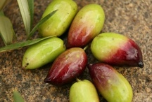 Olives / by Ann Marie Mangiro Winters