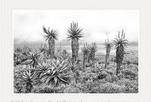 Black and White Fine Art Photography / Black and White Fine Art Photography by South African Master Photographer Marlene Neumann www.marleneneumann.com           E-mail: neumann@worldonline.co.za