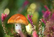 ¸¸❤ƒairies'๑Ʈables`✿.¸¸ / Often associated ~ and we do like to ~ with mini-enchantress, from the toadstools of fairytales to the exotic shiitake of Japan, mushrooms have held a place in our imaginations — and on our dinner plates — for centuries.  / by Sandra Lee Larsen