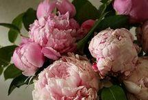 Flowers & Garden / Gorgeous Flowers and Garden Ideas