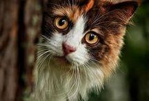 ༺♥༻Cats༺♥༻