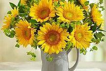 ༺♥༻Sunflowers༺♥༻