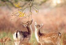 ༺♥༻Animal Kingdom༺♥༻