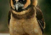 ༺♥༻Owls༺♥༻