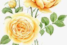 ༺♥༻Decoupage Flowers༺♥༻