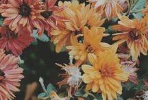 ༺♥༻Faded Flowers༺♥༻