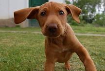 cute pups / by sarah sarah