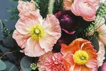 BLOOMS / Gorgeous blooms to bring life and colour to your Pinterest!