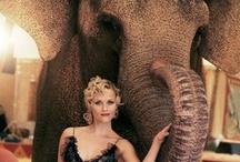 Water for Elephants / by Katie Allen