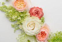 flowers. / by Brigitte