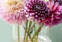 {blooms} / by Beth Miranda