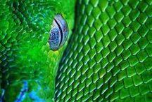 green ❖