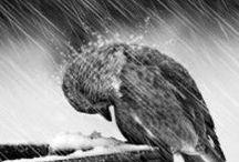 rain and | water drops ❖