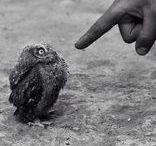 OWLS ❖