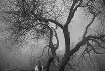 Trees ❖