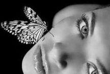 Butterfly ❖