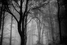 Black | Forest ❖