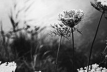 wild | flower ❖