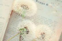 Dandelions ❖