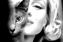 Marilyn Monroe ❖