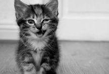 Kittens ❖