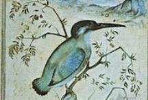 Kaos Birds / by Kaos