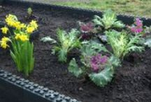 Gardening / Urban Farming / video demonstrations and tips for growing food ourselves