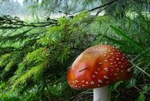Fungi / by ABL