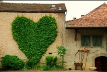 Home Tuscany
