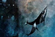 cetaceans.