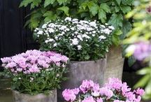Inspiration:  Outdoor Gardening and Container Gardening / by Jacqueline Roth♡