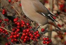 For The Birds #forthebirds / Create a sanctuary for birds in your own backyard. In addition to providing cover and nesting sites by planting an assortment of trees and shrubs, try adding some of these berry and seed bearing beauties and enjoy the show. Don't forget to provide some water too!