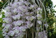 Inspiration:  Orchids♡ / Orchid displays for interiors and gardens  / by Jacqueline Roth♡