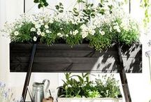 Green / Indoor garden plants … / by Jacqueline Roth♡