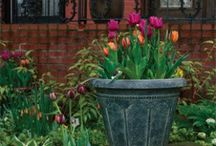Container Gardening~ / by Sharon Stead Vassily