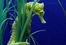 Seahorses/Snails~