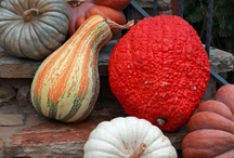 Pumpkins/Gourds/Acorns~ / by Sharon Stead Vassily