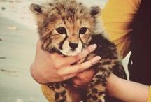 Animal Love / So Cute / by Lexie Simpson