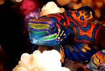 Under the Sea  / Ocean life-beautiful exotic sea creatures and images.