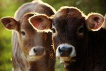 if I had a farm / by Adrianne Patnaud