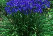 Flowers & gardening / by Sheila Miller