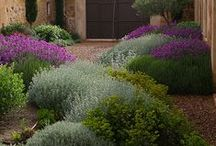 Garden / Garden tips and ideas for creating beautiful outdoor spaces / by Alanagh Stone
