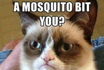 Mosquito Humour