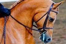 Elegance / Equestrian Finery / by Stephanie Blaylock