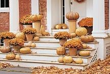Fall / by Susie Hindupur