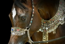 Desert Horse ~ Arabian Native Halters, Costumes, & Art / by Stephanie Blaylock