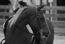 My Horses / by Stephanie Blaylock