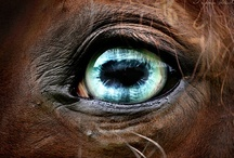 equine eyes / references for painting / by Stephanie Blaylock
