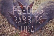 Natural Rabbit Care