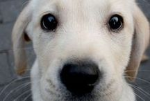 That Puppy Face / Only the cutest puppy faces should be pinned here. Have one? Add it to the board!